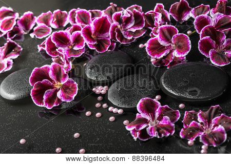 Beautiful Spa Still Life Of Blooming Dark Purple Geranium Flower And Beads On Reflection Dark Water,