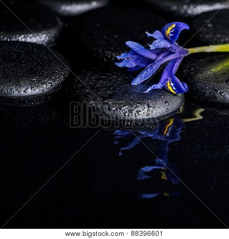 Beautiful Spa Concept Of Blooming Iris Flower And Black Zen Stones On Ripple Reflection Water, Close