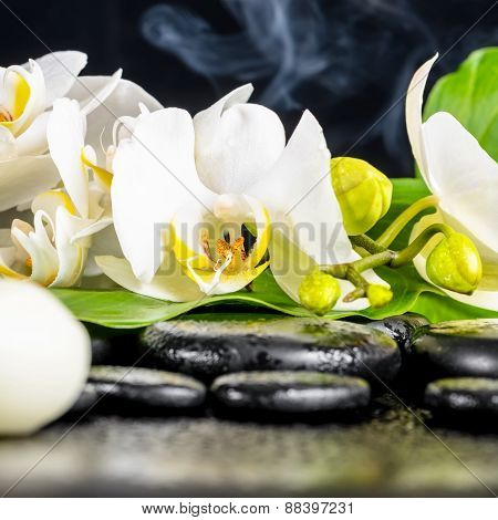 Beautiful Spa Concept Of White Orchid Flower, Phalaenopsis, Green Leaf With Dew, Smoke And Candles O