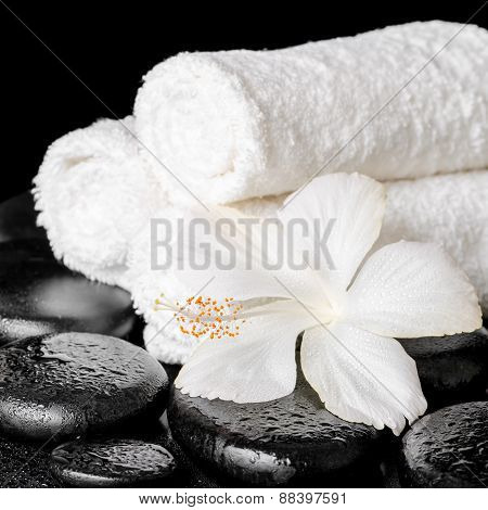 Spa Background Of White Hibiscus Flower And Towels On Zen Basalt Stone With Drops, Closeup