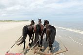 image of yoke  - Horses pulling tilt car at the beach from Dutch Terschelling - JPG