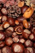 picture of glans  - Different autumn decoration with nuts and fir cones - JPG