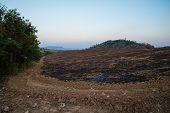 picture of mountain-ash  - The mountain was on fire for agriculture - JPG