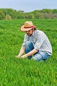 foto of cultivation  - Farmer Examines and Controls Young Wheat Cultivation Field Crop Protection Concept - JPG