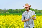 picture of cultivation  - Male Farmer Standing in Oilseed Rapeseed Cultivated Agricultural Field Holding Canola Flowers for Examining and Controlling The Growth of Plants Crop Protection Agrotech Concept - JPG
