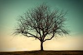 stock photo of lonely  - Lonely dead tree with the blue sky Vintage style - JPG