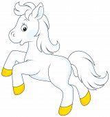 foto of white horse  - Little white horse running - JPG