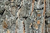 stock photo of walnut-tree  - Old walnut tree trunk detail texture as natural background - JPG