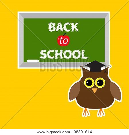 Owl In Graduate Hat Academic Cap And Green Board With Chalk On The Wall Back To School Education Car