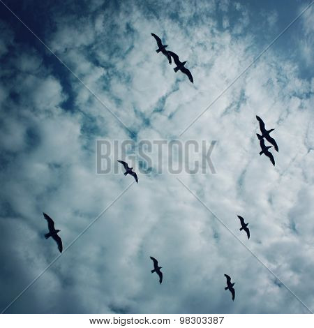 Flock Of Gulls Against Blue Sky. Cloudy Summer Day.