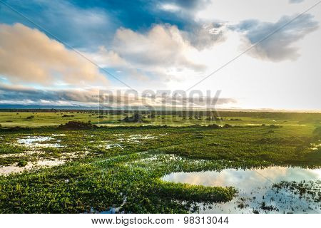Stunning Wetland landscape in Pantanal located in Brazil