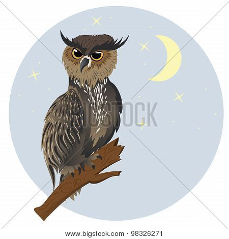 Horned Owl On A Branch