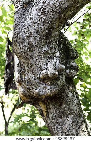 Wird Looking Tree
