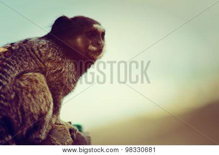 Monkey in their habitat