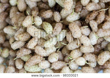 Morus mulberry fruits