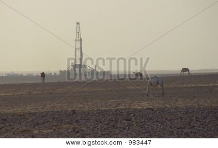 Camels And Drilling Rig