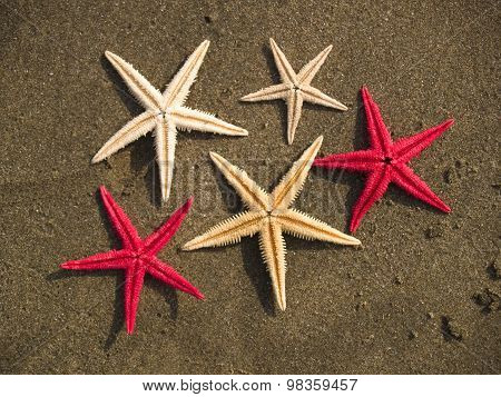 Starfishes On The Sand