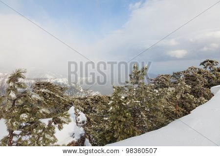 snow-covered landscape. coniferous forest in the mountains