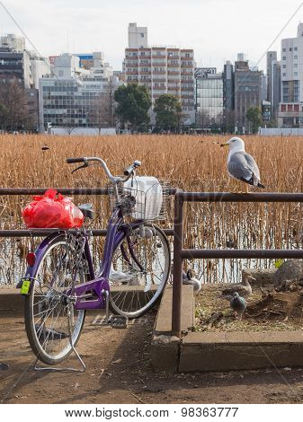 Bird Seagull And Bicycle