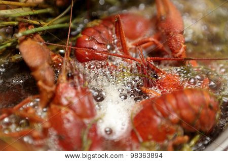Cooking Crayfish With Dill