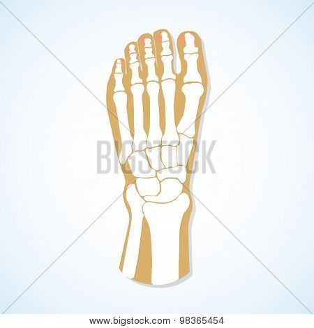 Flat design of  foot and  skeleton.