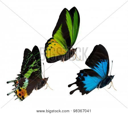 macro photo of butterflies isolated on white background