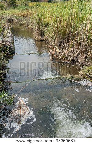 Freshwater Stream 4