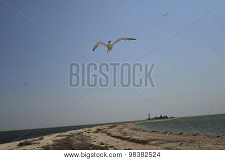 Biruchiy Island