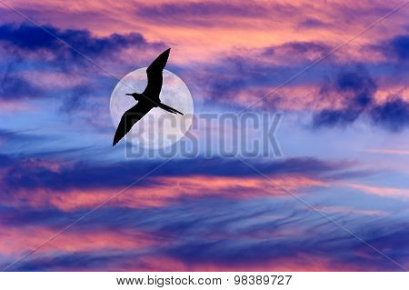 Bird Flying Moon