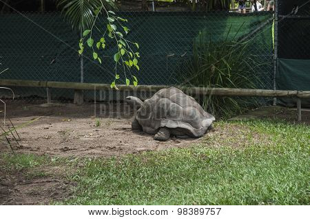 Giant Turtle Photographed In A Zoo