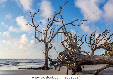 Dead Trees on Driftwood Beach at Jekyll Island Georgia