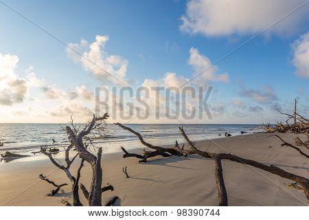 Sunrisr at Driftwood Beach on Jekyll Island Georgia