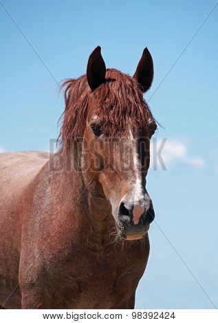Portrait of powerful red horse