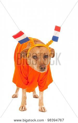 Dutch dog in orange with flags as soccer supporter