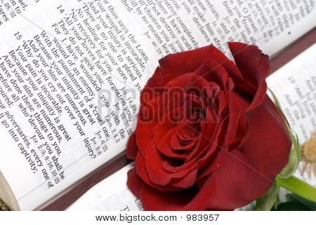 Bible And Rose 3