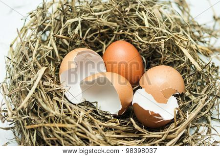 Hatched Egg
