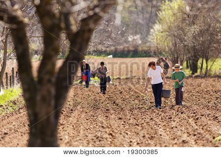 Family Of Farmers Sowing On Their Land
