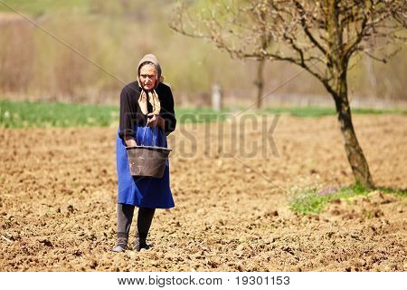Old Farmer Woman Sowing