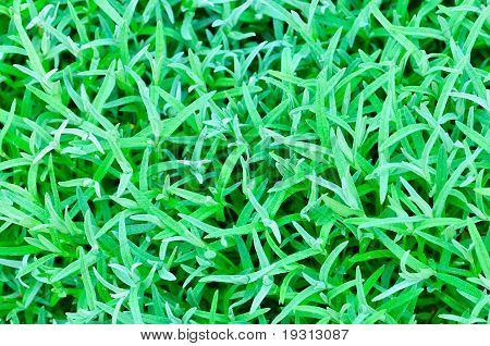 abstract background of the green grass
