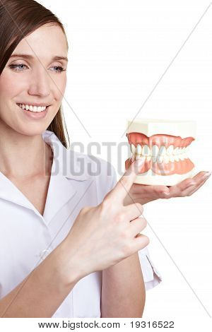 Dentist With Artificial Teeth Model