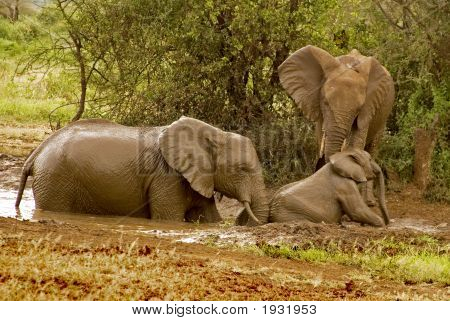 Baby Elephant Needs Help From Pond