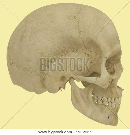 Side Skull