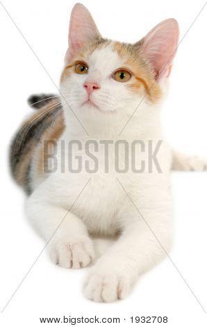Cat auf weißem Hintergrund