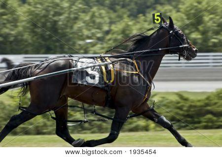 Five Horse Winning