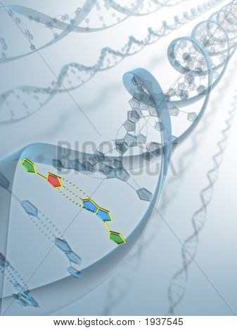 Dna Connection