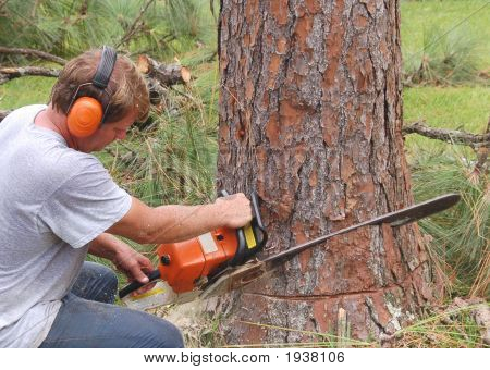 Cutting A Tree