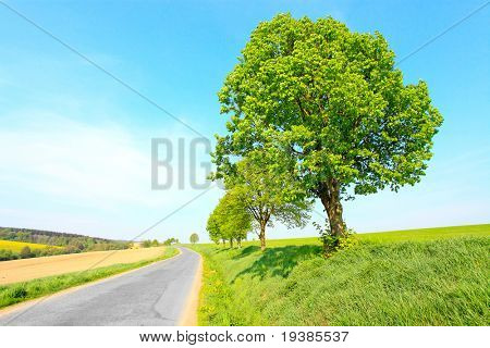 Epmty road with lonely tree (Tilia cordata) on a roadside. Conceptual image. Ecology metaphor.