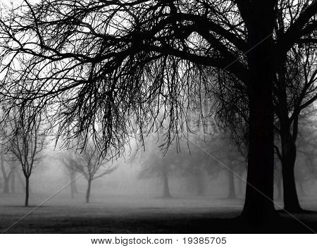 a very foggy day in the park