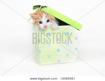 a tiny kitten peeking out of a gift box