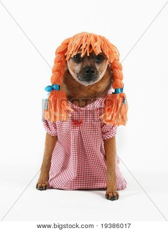 a dog dressed up with a wig and a dress